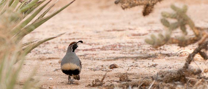 Bird Watching at Twentynine Palms, CA