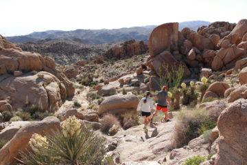 Visit 29 Palms Discover the Mojave Desert