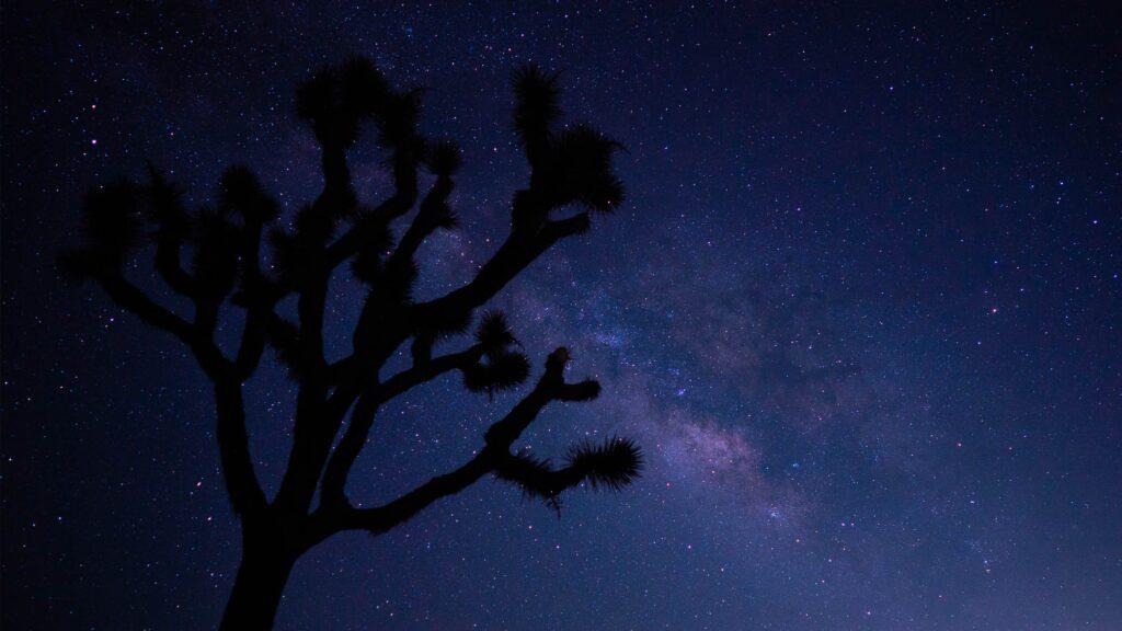 Visit 29 Palms Stargazing Joshua Tree National Park